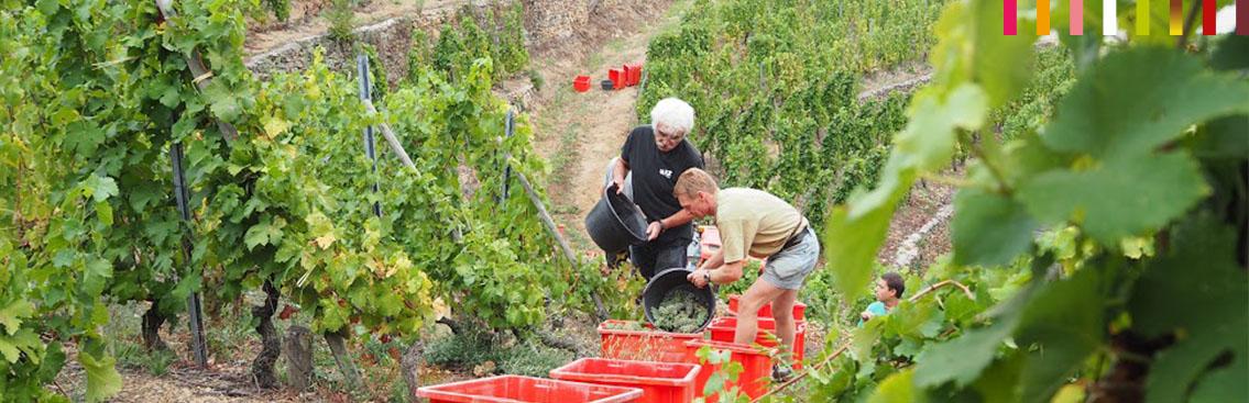 Domaine viticole Didier Morion